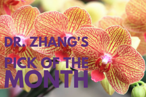 Pick of the Month (3)